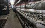 Выращивание шампиньонов в теплице: где растут, как вырастить (технология), что нужно, фото, видео – выращиваем в теплице