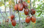 Помидоры черный мавр: описание, сорта, томатов, отзывы – выращиваем в теплице