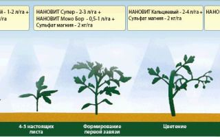 Чем подкормить рассаду помидоров, чтобы были толстенькие стебли: виды удобрений, схема и время внесения в теплице, открытом грунте, видео – выращиваем в теплице