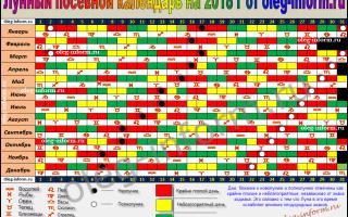 Лунный посевной календарь на январь 2018: чем заняться садоводам и огородникам в течение месяца, таблица, приметы, видео, фото – выращиваем в теплице