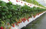 Промышленное выращивание клубники в открытом грунте: оборудование, технология, конструкции, фото, видео – выращиваем в теплице