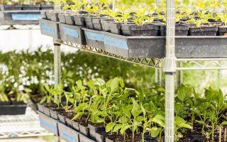Календарь садовода – выращиваем в теплице