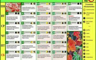 Лунный календарь садовода и огородника на ноябрь 2018 : таблица, благоприятные дни, приметы – выращиваем в теплице