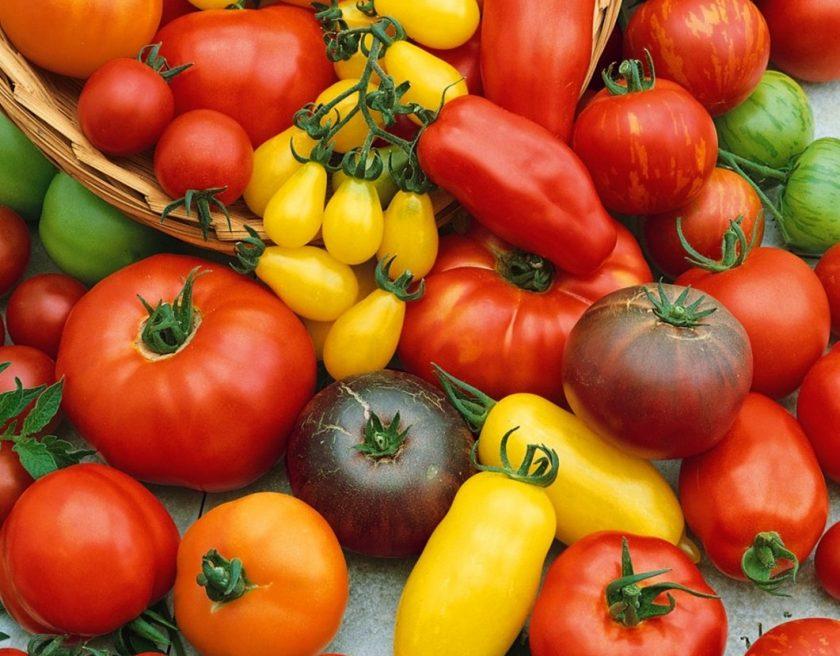 помидоры купчиха описание сорта фото отзывы